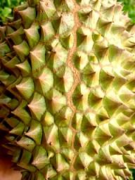 Durian Management